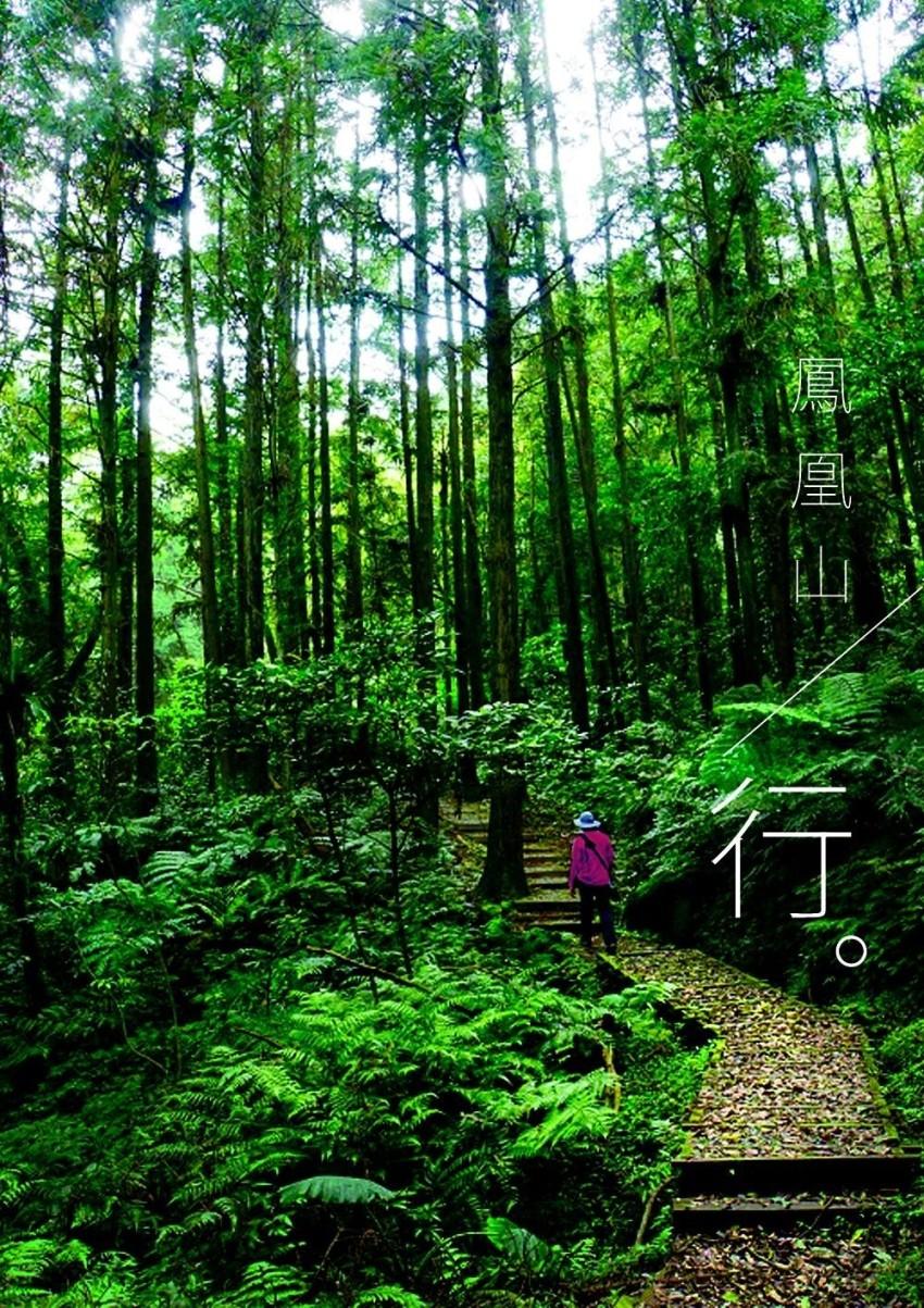 大树林图片