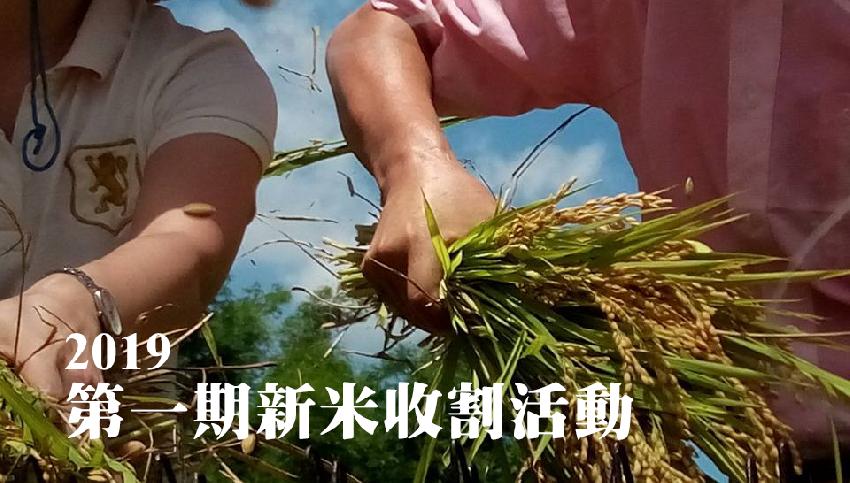 【石虎米】 2019第一期新米收割活動活動日期:2019-07-07 ,DIY活動、DIY體驗、手作課程, 志工相關